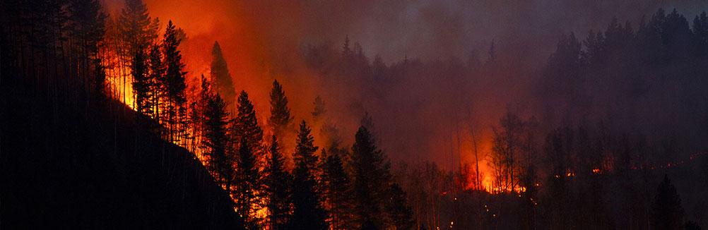 La forêt brûle, et on regarde ailleurs
